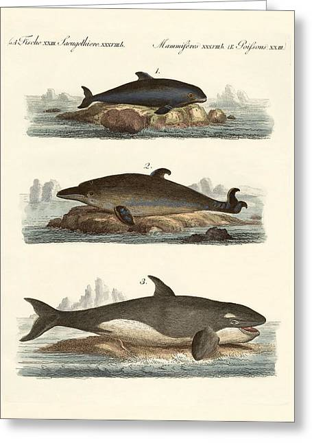 Killer Drawings Greeting Cards - Kinds of whales Greeting Card by Splendid Art Prints