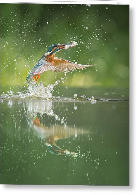 Reflections In River Greeting Cards - Kingfisher with catch. Greeting Card by Andy Astbury