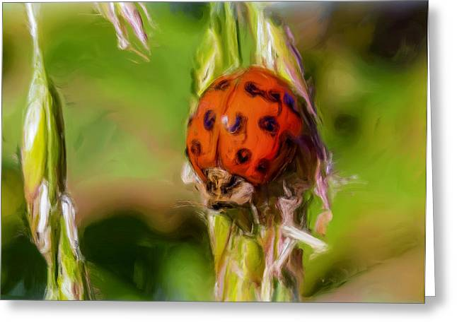 Lady Tapestries - Textiles Greeting Cards - Lady Bug Greeting Card by Dennis Bucklin
