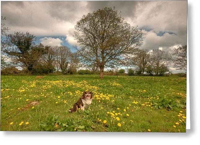 Irish Farm Greeting Cards - Lassie Greeting Card by John Quinn
