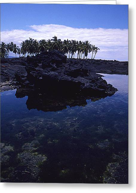Spinner Dolphin Greeting Cards - Lava Palms Greeting Card by Ron Regalado