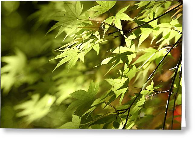 Autumn Photographs Greeting Cards - Leaves Greeting Card by Les Cunliffe