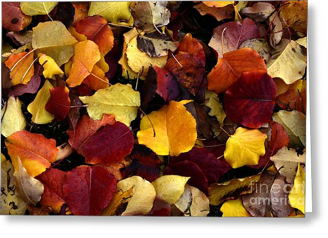 Fallen Leaf Greeting Cards - Leaves Of Autumn Greeting Card by Bob Christopher