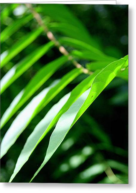 Wildflower Photos Greeting Cards - Leaves of Green  Greeting Card by Neal  Eslinger