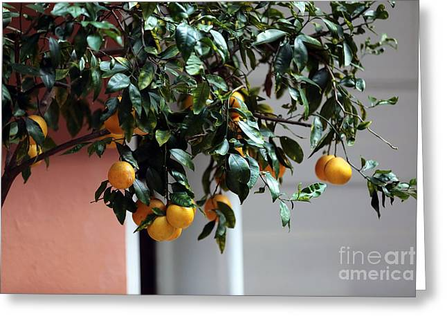 Fruit Tree Art Greeting Cards - Lemon Tree Greeting Card by John Rizzuto