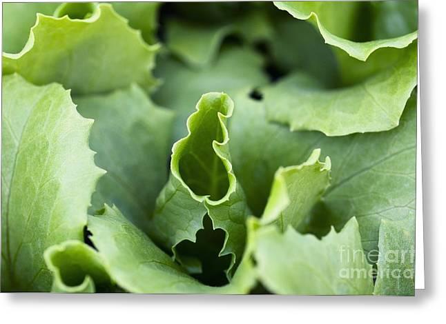 Lettuce Greeting Cards - Lettuce Greeting Card by Angel Fitor