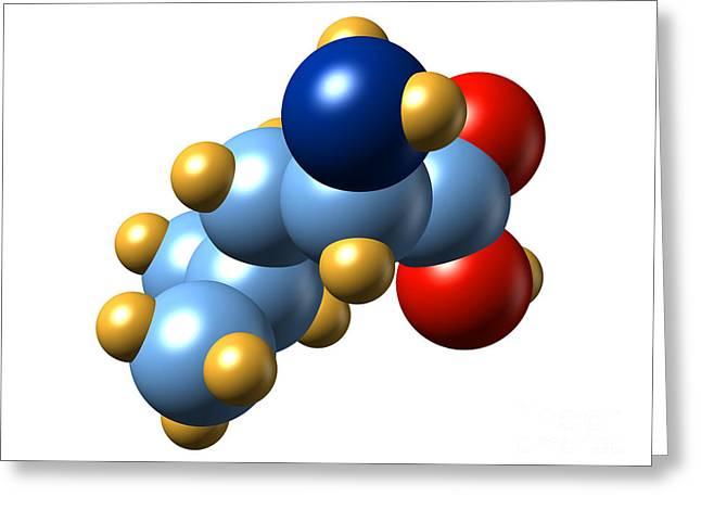 Essential Greeting Cards - Leucine, Molecular Model Greeting Card by Dr. Mark J. Winter