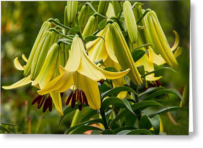 Stigma Greeting Cards - Lilies Greeting Card by Wayne Stabnaw