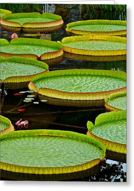 Lilly Pad Greeting Cards - Lilly Pads Greeting Card by Frozen in Time Fine Art Photography