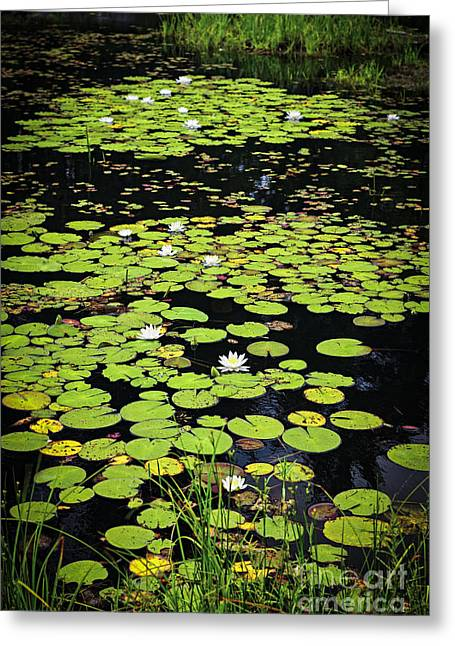 Landscape. Scenic Greeting Cards - Lily pads on dark water Greeting Card by Elena Elisseeva