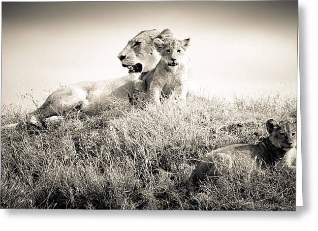 Love The Animal Greeting Cards - Lion Family Portrait Greeting Card by Jennifer Minette