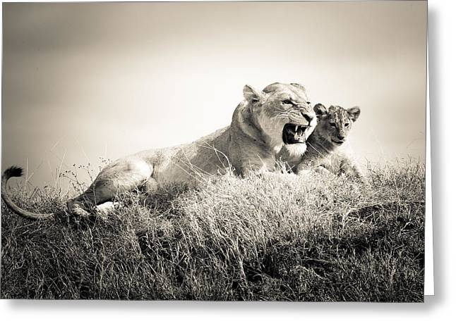 Love The Animal Greeting Cards - Lion Tenderness 3 Greeting Card by Jennifer Minette