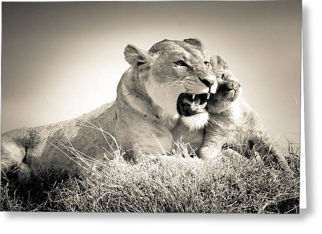 Love The Animal Greeting Cards - Lion Tenderness Greeting Card by Jennifer Minette