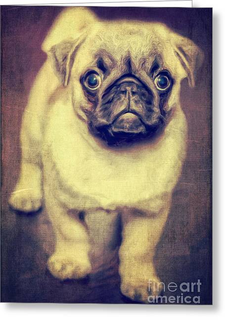 Pet Pictures Greeting Cards - Little dog Greeting Card by Angela Doelling AD DESIGN Photo and PhotoArt