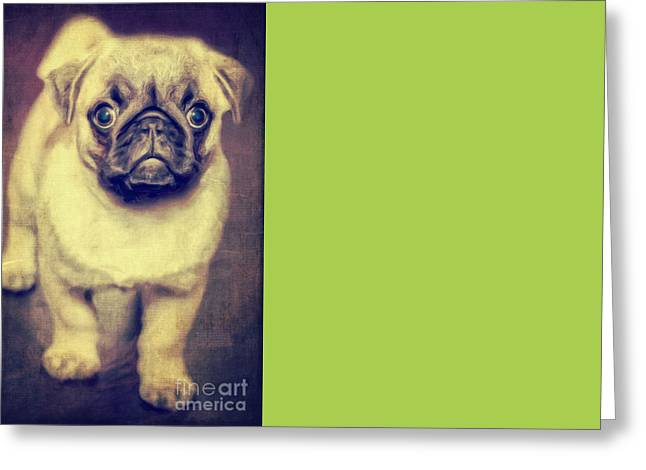 Clever Photographs Greeting Cards - Little dog Greeting Card by Angela Doelling AD DESIGN Photo and PhotoArt