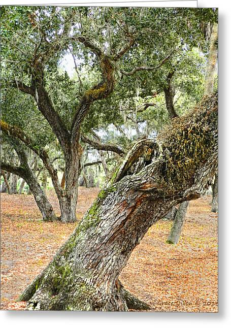 Gnarly Greeting Cards - Live Oaks Greeting Card by Grace Dillon