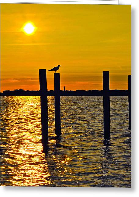 Lone Gull Greeting Cards - Lone Gull Greeting Card by Frozen in Time Fine Art Photography