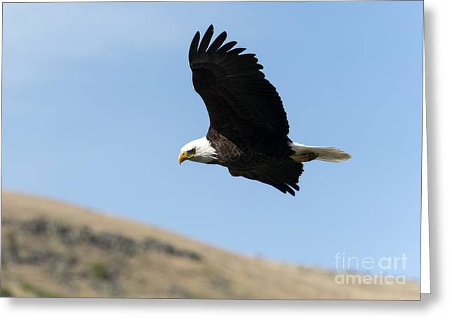 Eagle Greeting Cards - Looking down on the World Greeting Card by Mike Dawson