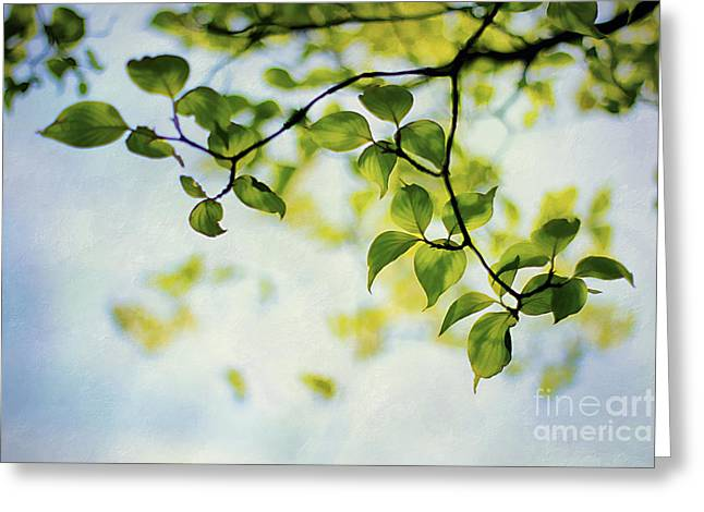 Backlit Greeting Cards - Looking Up Greeting Card by Darren Fisher