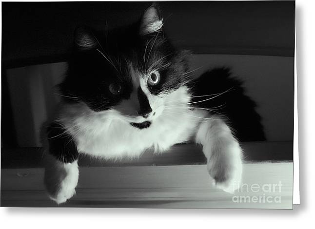 Gray Muzzle Greeting Cards - Low Key Cat Greeting Card by Linsey Williams