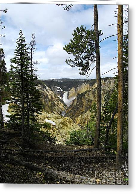 Scenics Photographs Greeting Cards - Lower Falls from Artist Point Yellowstone National Park Greeting Card by Shawn O