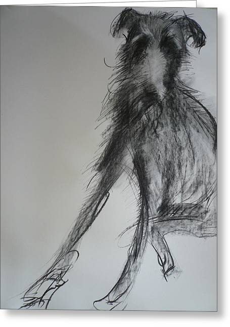 Lurcher, 2012 Charcoal And Oil On Paper Greeting Card by Sally Muir