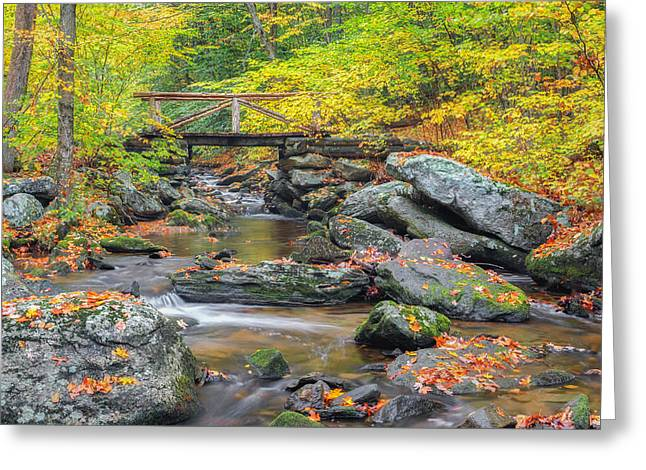 Fallen Leaf Greeting Cards - Macedonia Brook Greeting Card by Bill  Wakeley