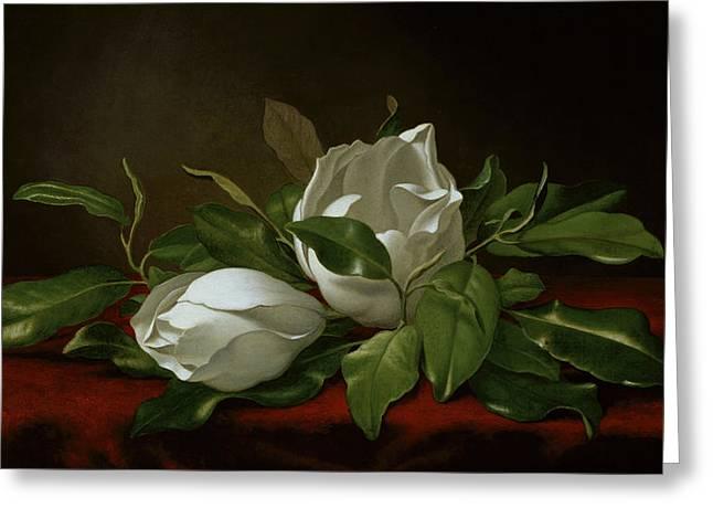Magnolia Greeting Card by Martin Johnson Heade