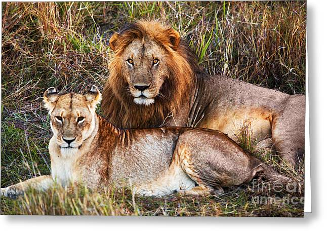 Serengeti Lioness Greeting Cards - Male lion and female lion. Safari in Serengeti. Tanzania. Africa Greeting Card by Michal Bednarek