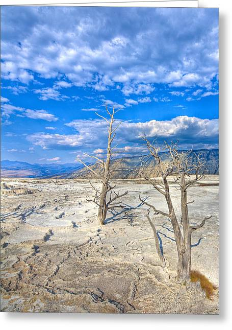 Geyser Greeting Cards - Mammouth Hot Springs Greeting Card by Jeff Donald