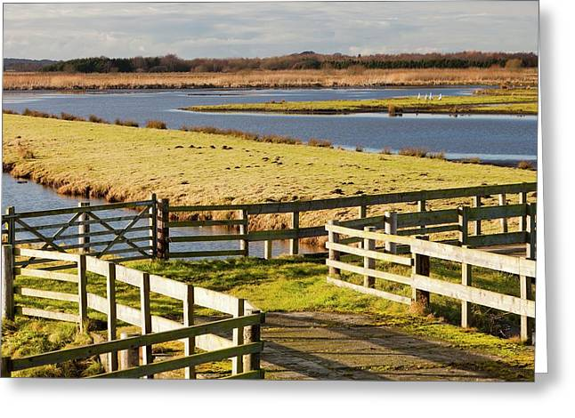 Martin Mere Bird Reserve Greeting Card by Ashley Cooper
