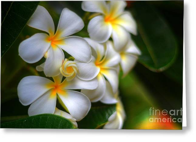 Tropical Photographs Greeting Cards - Maui Plumerias Greeting Card by Kelly Wade