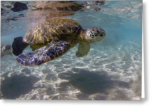 Recently Sold -  - Lahaina Greeting Cards - Maui Turtle Greeting Card by James Roemmling