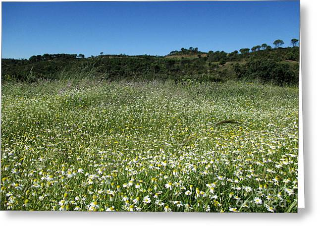 Temperature Greeting Cards - Meadow near Nerva Greeting Card by Chani Demuijlder