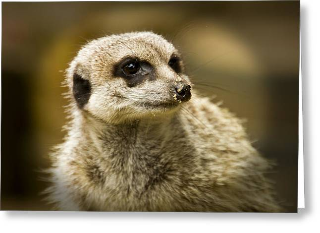 Meerkat Photographs Greeting Cards - Meerkats  Greeting Card by David French