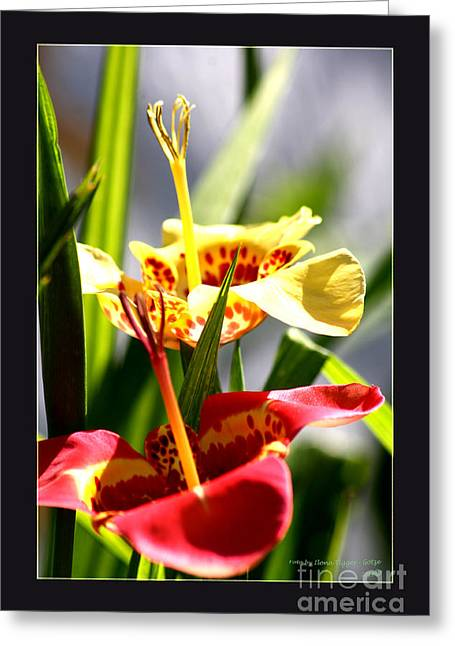 Shower Curtain Greeting Cards - Mexikanische Tigerlilien Greeting Card by  ILONA ANITA TIGGES - GOETZE  ART and Photography