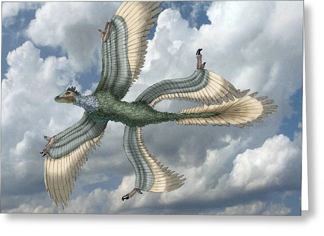 Microraptor Greeting Card by Spencer Sutton