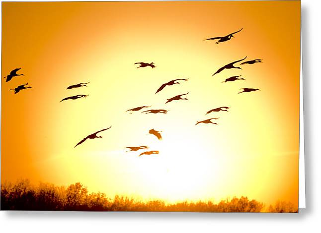 Sandhill Crane Greeting Cards - Migration Greeting Card by Alexey Stiop