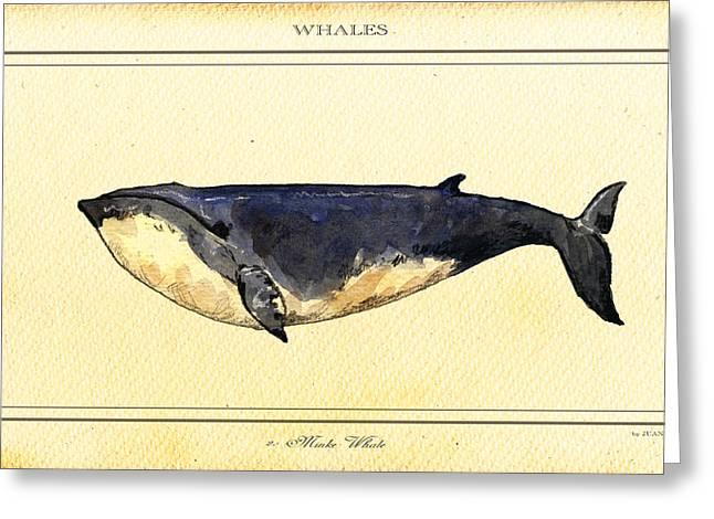 Minke Whale Greeting Card by Juan  Bosco