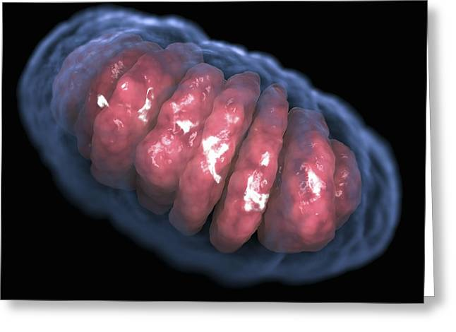 Mitochondrion Greeting Card by Science Picture Co