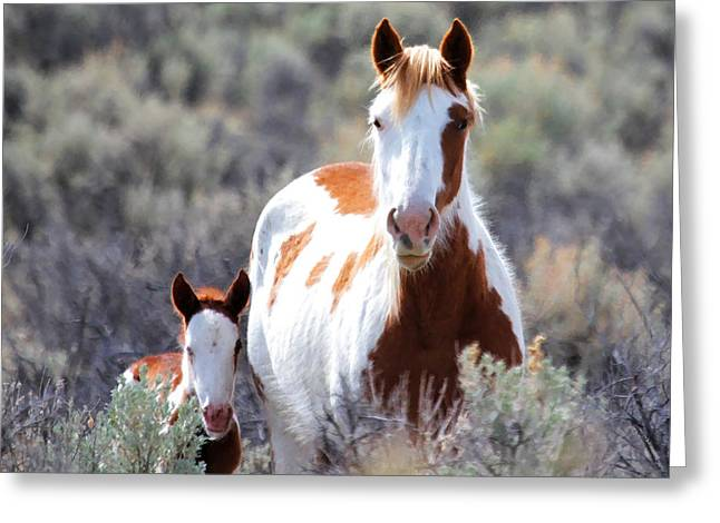 Quarter Horses Greeting Cards - Momma And Baby In The Wild Greeting Card by Athena Mckinzie