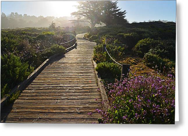 Coast Hwy Ca Greeting Cards - Morning Glory Greeting Card by Lynn Bauer