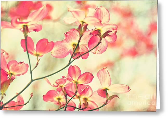 Dogwood Blossom Greeting Cards - Morning Light Greeting Card by Sylvia Cook