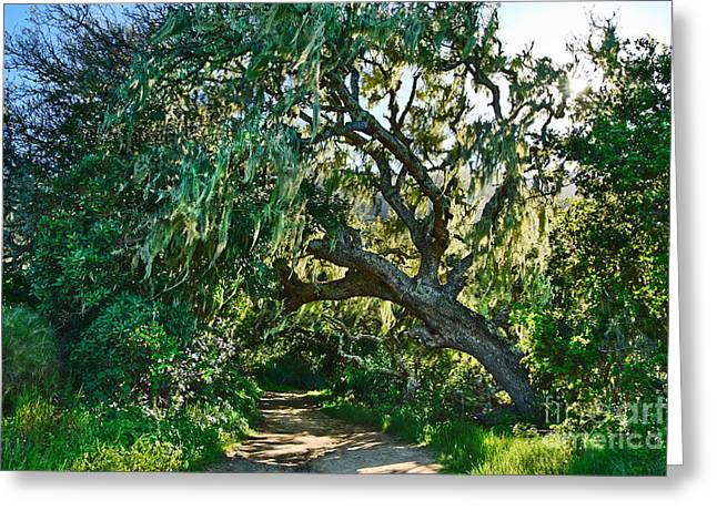 Moss Covered Tree In Garland Ranch Park In Monterey California. Greeting Card by Jamie Pham