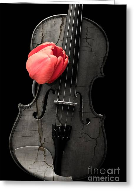 Music Lover Greeting Cards - Music Lover Greeting Card by Edward Fielding