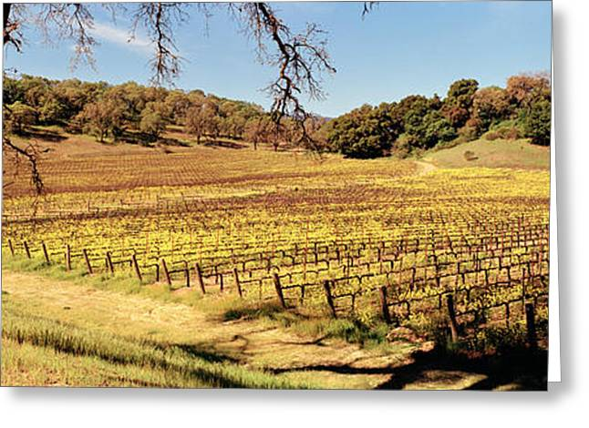 Vitis Greeting Cards - Mustard Flowers In A Field, Napa Greeting Card by Panoramic Images