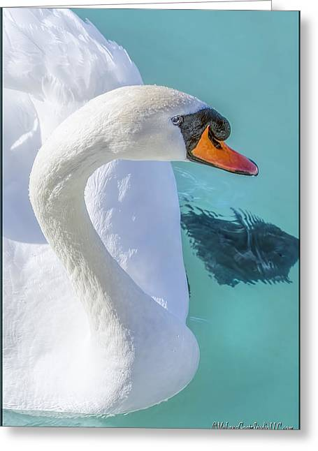 Swan Greeting Cards - Mute Swan on St Clair River Greeting Card by LeeAnn McLaneGoetz McLaneGoetzStudioLLCcom