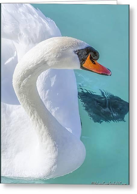 Mute Swan On St Clair River Greeting Card by LeeAnn McLaneGoetz McLaneGoetzStudioLLCcom
