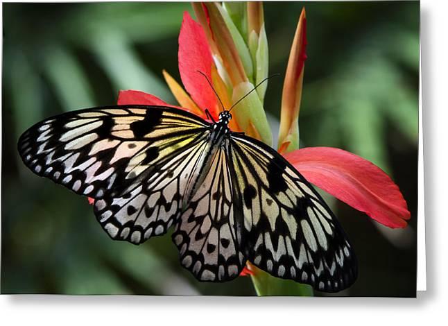 Kites Greeting Cards - Natures Treasures  Greeting Card by Saija  Lehtonen