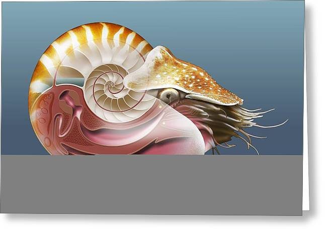 Nautilus, Artwork Greeting Card by Science Photo Library